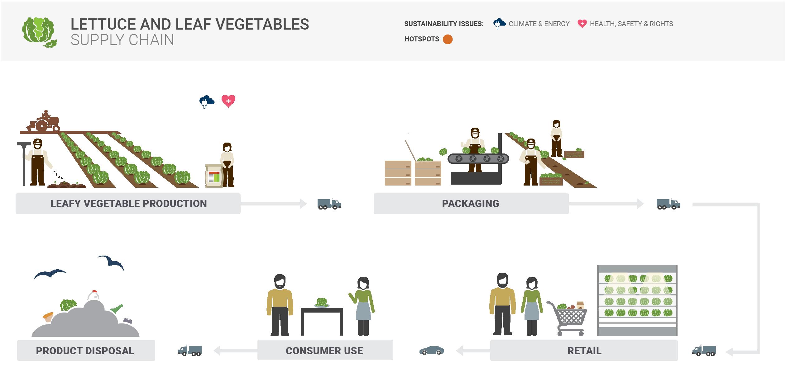 Lettuce Supply Chain